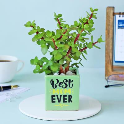 Jade Plant In Best Mom Ever Ceramic Planter