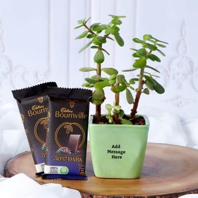 Jade Plant In Ceramic Planter With Cadbury Chocolates - Customized With Message