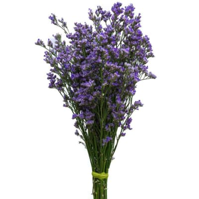 Limonium Maine Blue (Bunch of 10)