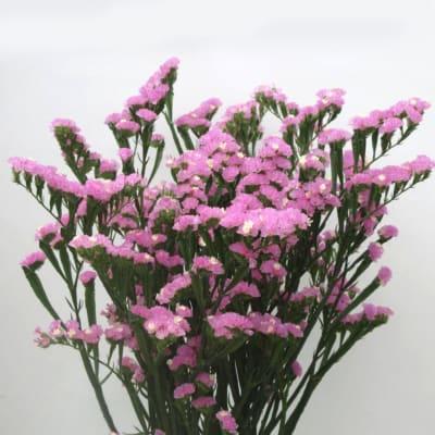 Limonium St Pink (Bunch of 10)