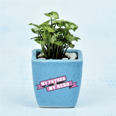 Mini Syngonium Plant in Fathers Special Customized Ceramic Pot (Low Light/Moderate Water)