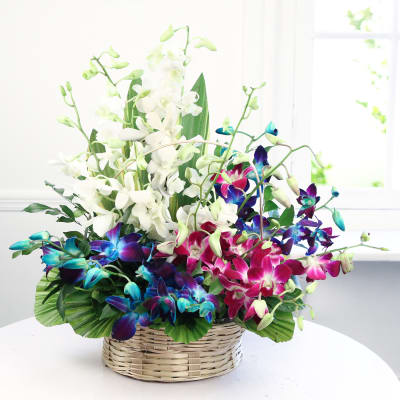 Mixed Orchids In Round Handle Basket