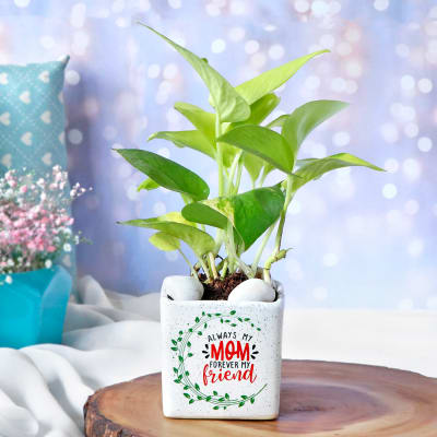 Money Plant In White Ceramic Planter For Mom