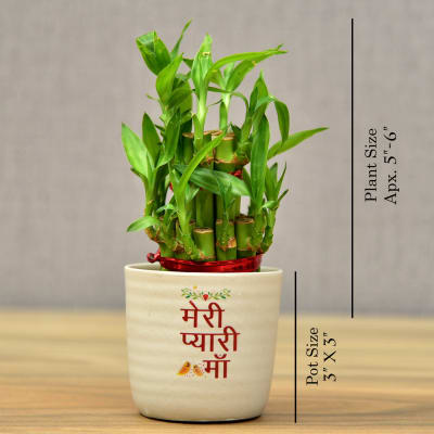 Mothers Day Special Two Layer Bamboo In Meri Pyari Maa Quote Ceramic Pot