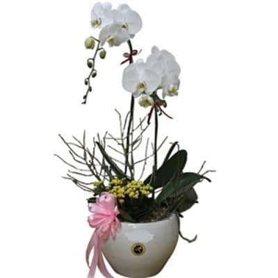 Orchids In Vase