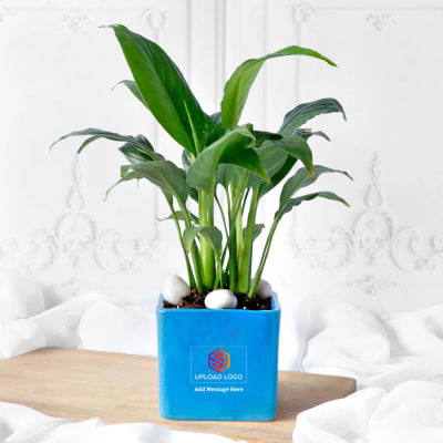 Peace Lily Plant In Blue Ceramic Planter - Customized With Logo And Message