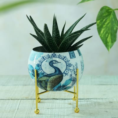 Peacock Design Round Metal Planter without Plant