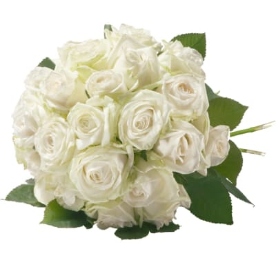 Pearl of Roses in White