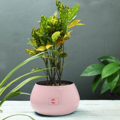 Pink Planter without Plant - Customized with Logo