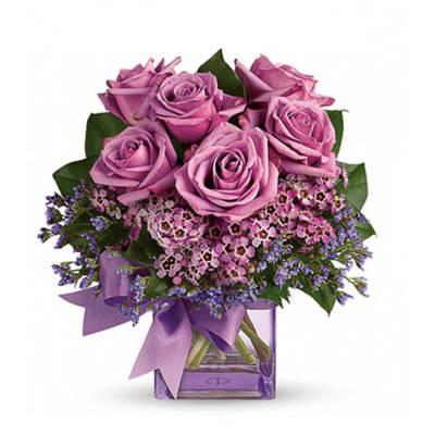 Purple Morning Melody