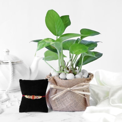 Rudraksh Rakhi with Money Plant in Jute Wrapping