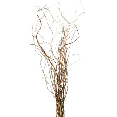 Salix (Bunch of 10)