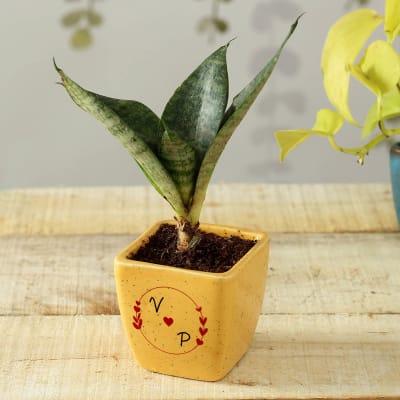 Snake Plant in Personalized Ceramic Pot