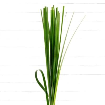 Steel Grass (Bunch of 20)