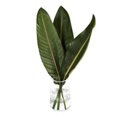 Strelitzia Leaf (Bunch of 10)