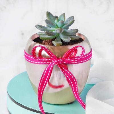Succulent in Rose Gold Pot