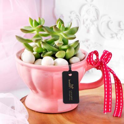 Succulent Love Teacup