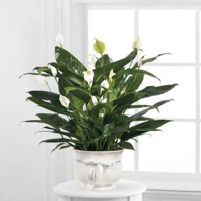 The FTD Comfort Planter