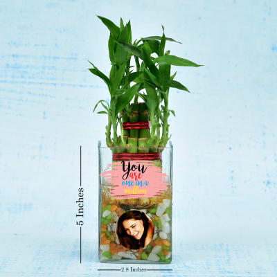 Two Layer Lucky Bamboo In Personalized Glass Pot (Moderate Light/Less Water)