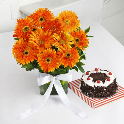 Vase Arrangement of Orange Gerberas with Black Forest Cake (Half Kg)