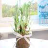 2 Layered Bamboo Plant