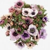 Anemone Galil Pastel (Bunch of 10)