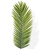Areca Palm (Bunch of 50) Online