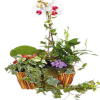 Arrangement of Plants in basket