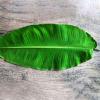 Banana Leaf (Bunch of 10) Online