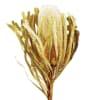Banksia Hookeriana Yellow (Bunch of 5) Online