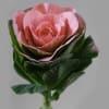 Brassica Dolce Vita (per Stem) Online