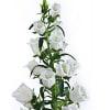 Campanula Medium Champion White (Bunch of 10) Online