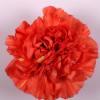 Carnation Caroline (Bunch of 20) Online
