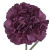 Carnation Extasis (Bunch of 20) Online