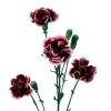 Carnation Spr. Berry (Bunch of 20) Online