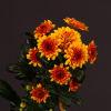 Chrysanthemum Deliflame (Bunch of 10) Online