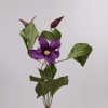 Clematis Blue Piroutte (Bunch of 10)