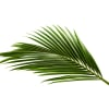 Coconut Leaf (Bunch of 100) Online