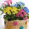 Colorful Flowering Market Garden