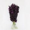 Dendrobium Black Beauty (Bunch of 20) Online