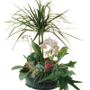 Elegant Plant Arrangement