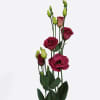 Eustomas du Arosa Red (Bunch of 10) Online