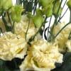 Eustomas Du Rosita Yellow (Bunch of 10) Online