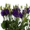 Eustomas En Piccolo Violet (Bunch of 10) Online