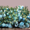 Eustomas Rosi Light Blue (Bunch of 10) Online