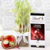 Good Luck Plant With Lindt Chocolate & Tikka