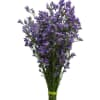 Limonium Maine Blue (Bunch of 10) Online