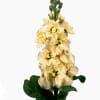 Matthiola Centum Cream (Bunch of 10) Online