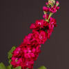 Matthiola Fantasy Red (Bunch of 10) Online