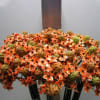Ornit Saundersiae Orange (Bunch of 10) Online